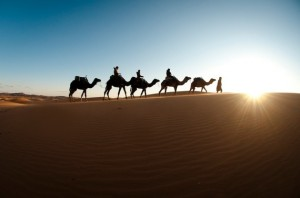 A camel caravan traversing Erg Chebbi in the Sahara Desert of Morocco. Photo: Agnieska Czerska Open Sky Expeditions