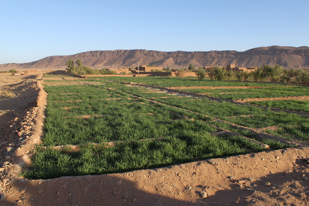 Desert agriculture in Morocco. Photo credit:  Richard Allaway on Flickr.