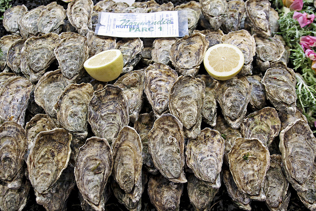 Oysters in Morocco. Photo: Magalie L'Abbé